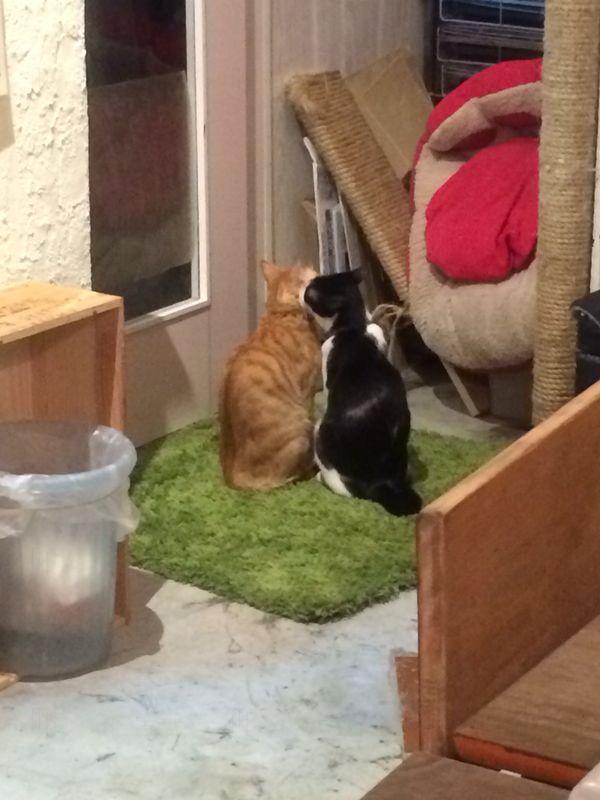 躲在一旁享受「二貓世界」。