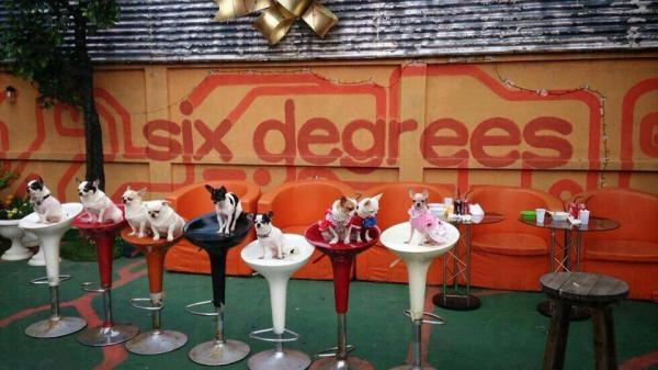 排排坐。(SIX DEGREES CAFE Facebook)