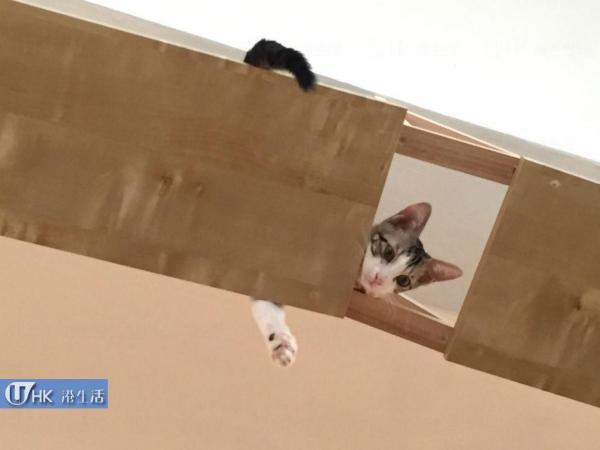 大澳流浪貓之家
