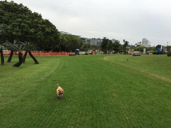 草地面積十分大,狗隻可以在草地上狂奔