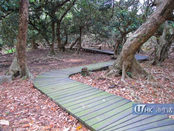 路段已鋪設木製棧道,方便遊人觀賞
