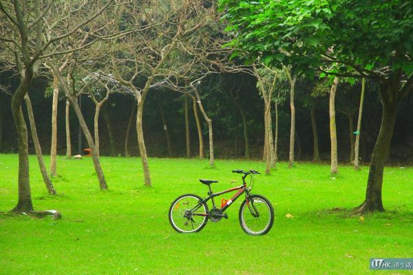 甚有外國踏單車感覺
