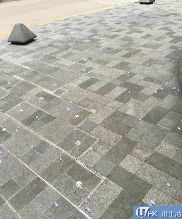 地上的花瓣