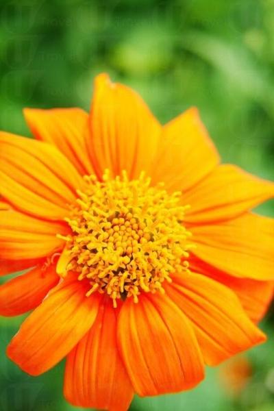 公園開滿不同種類的花朵,絕對是誠意之作。