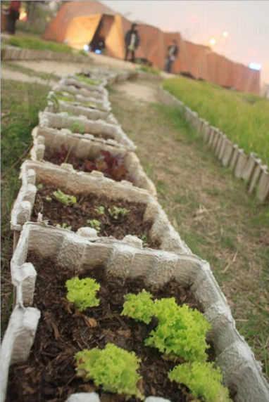 1 月 16 日遊客可到場即席收割有機蔬菜,自製美味沙律( BYOBowl )。