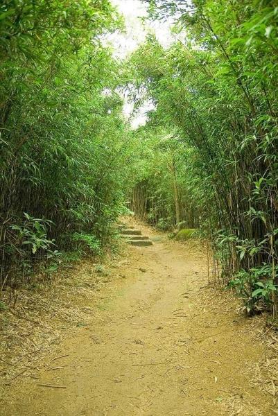 土地灣起步處,香港少見的一小片竹林。