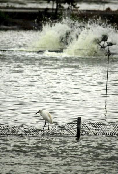雖說不少後鳥已經飛離米埔,不過佢有機會拍下不少精彩照片。(關璇攝)