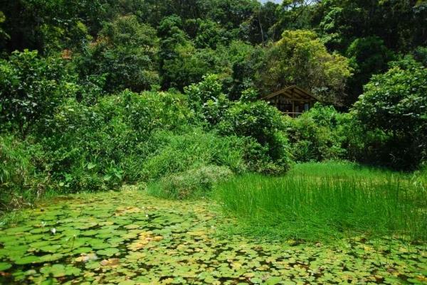 置身森林中的荷花池,可惜荷花盛放時間已過。