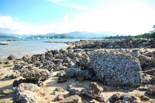 沙灘的石頭滿布蠔殼。