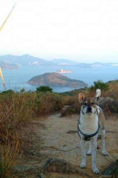就連遛狗的島民亦看帶小狗上來吹吹海風。