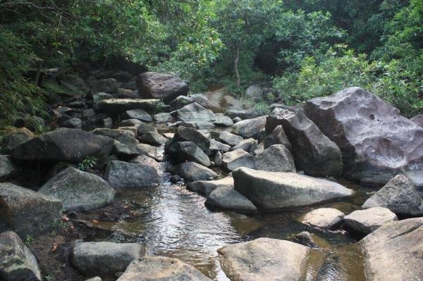 前往紅樹林的路要經過溪澗,踏過石頭時緊記小心滑倒。