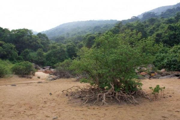 紅樹林生長於鹹淡水交界,在海下灣可找到近 7 種紅樹品種。