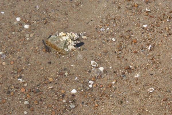 沙灘佈滿貝殼,緊記觀賞過後要放回原處。