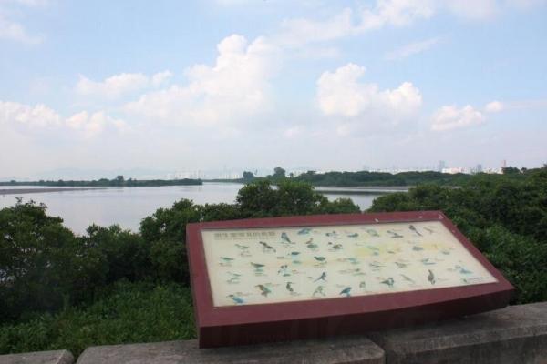 在山貝河和錦田河的交匯處,有展板介紹南生圍常見的鳥類。
