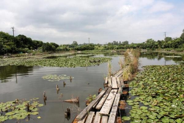 蓮花池上的浮橋,踏上去可一嘗「水上飄」的滋味。
