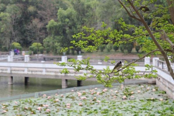 在中大可以找到不少雀鳥的蹤影。