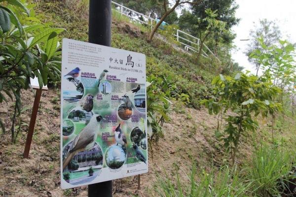 「中大留鳥」告示牌,教大家認識不同品種的雀鳥。