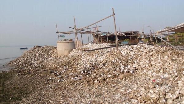 牡蠣殼遍地,形成一個人造蠔灘。