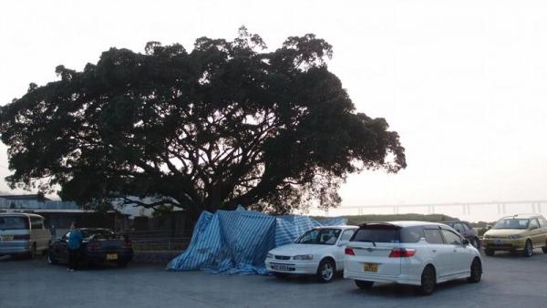 廟外停車場前臨矮小紅樹林,景觀開揚。