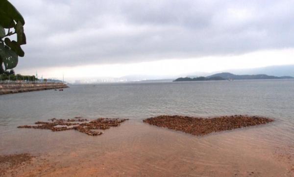 在終點旁石灘,可看到人氣「心形石」。