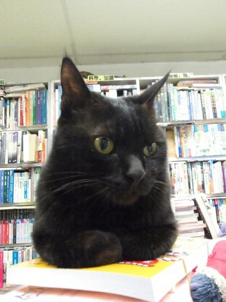 認住呢隻小黑,是書店中的貓大佬。
