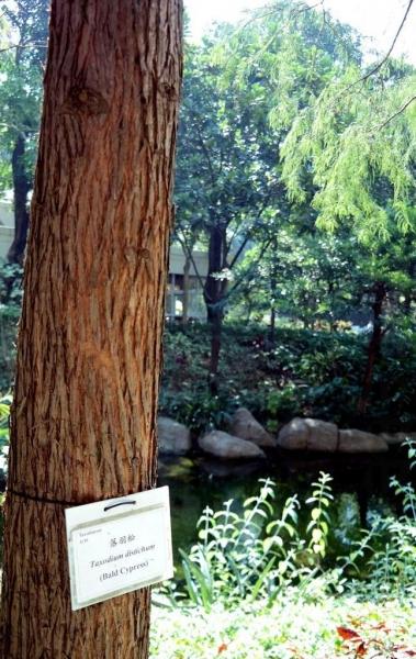 樹上貼有名牌,十分易認。