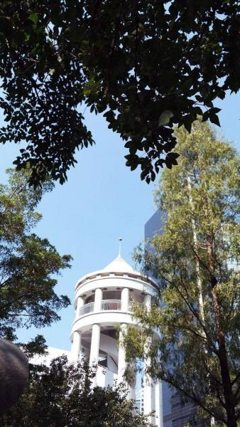 圖頂位置樹葉就是三角槭,與楓葉有幾分相似。