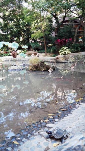 公園內的一個小水池