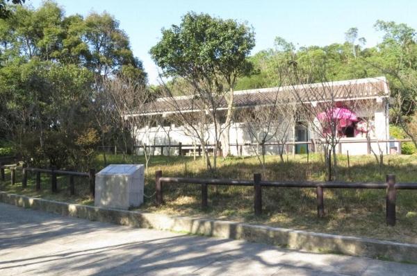 在小食亭前就是櫻花園,圍欄內有數十棵緋寒櫻。