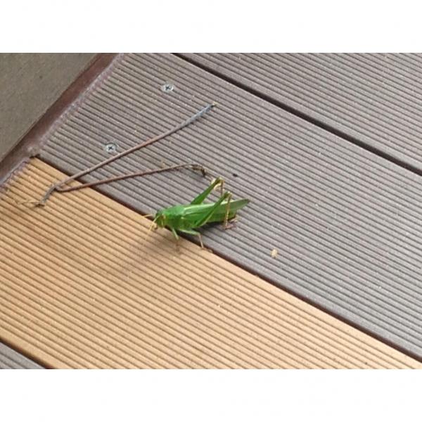 行人徑上隨時遇上小昆蟲!