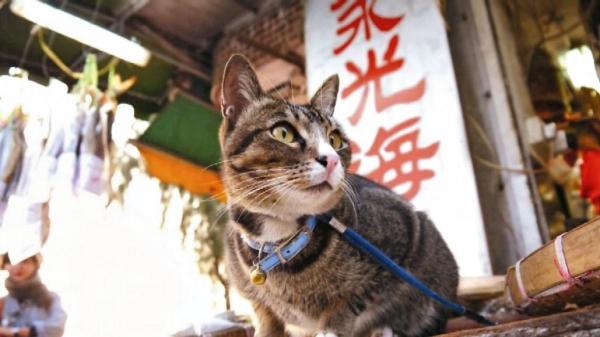 在點點長洲的Facebook 和《點兒》其中一期, 貓都是重要的角色,長洲每隻貓都有牠的位置,包括永光海味的小黑