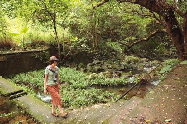 往返蓮澳有機農場,必經這道小溪石路。